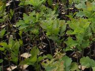 Viveros agrobiotruf trufas chile for Viveros en talca